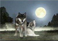 "Luna"" Wolves Print - Family, protection, belonging!"